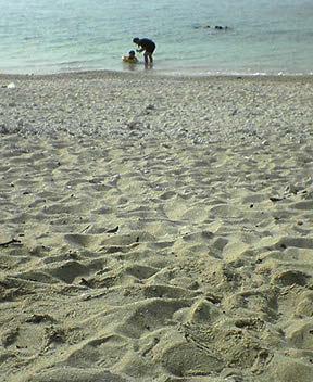 最後の米原の海